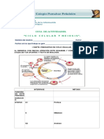 BIO2MUNI1N2PEN Ciclo Celularmeiosis 2014