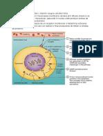 Hormoni Proteici Si Sterolici