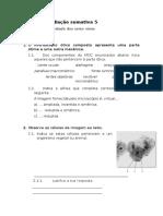 Ficha Avaliacao Sumativa 5