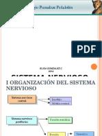 Bio3muni1n1pen Introduccion Sistema Nervioso