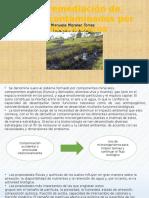 Biorremediación de suelos contaminados por hidrocarburos