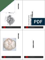 Sistema Vestibular  Anatomía-Fisiología