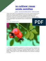 Cómo cultivar rosas usando semilla1.docx