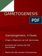 Gametogénesis 1.ppt