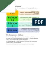 Patología y Patogenia Uncinarias