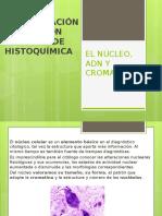 El Núcleo, Adn y Cromatina