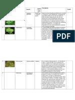 Inventario de Flora Alto Purus