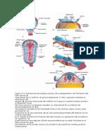 Práctica Sistema Nervioso