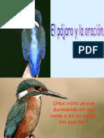 El_pajaro_y_la_Oracion