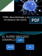 Neurobiologia y Ciclos Circadianos Salme