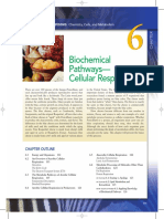 Biochemical Pathways.pdf