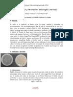 Cultivos Puros y Observaciones Microscópicas Final
