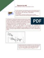 espumacafe.pdf
