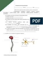evaluacion cs naturales un sistema nervioso.docx
