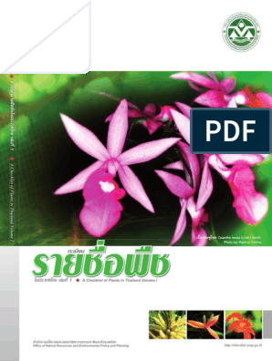 100 seeds Kyllinga brevifolia Rottb Thai herb very rare Green kyllinga New