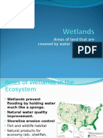 06-wetlands estuaries saltwater intrusion  1