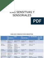 Vias Sensitivas y Sensoriales