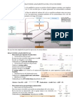 TEMA 41 racciones anapleróticas