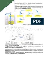 TEMAS 39 Metabolismo Del Piruvato