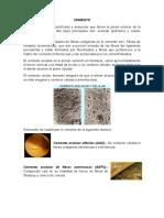 Cemento y Hueso Alveolar