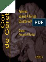 Cortes Anatomicos de Cerebro
