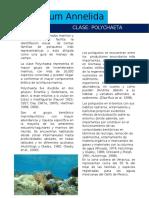 Catalago Fotografico de Poliquetos (Autoguardado)