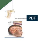 Diagram Otak