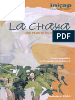 Chaya 2004