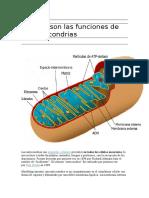 Cuáles Son Las Funciones de Las Mitocondrias