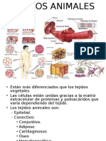 tejido animal.ppt