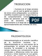 Expo La-evolucion-humana ULTIMO (2)