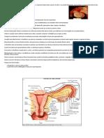 Tubas Uterinas - Feminino - Sistema Genital - Sistemas - Aula de Anatomia