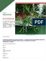 Cómo Cultivar y Curar Las Plantas
