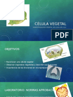 CÉLULA VEGETAL L01.pptx