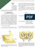 146541904 02 Crescimento Craniofacial PDF