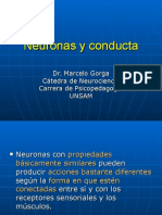 Power 2015 Neuronas y Conducta.