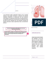 Histologia de Pleura y drenaje pleural
