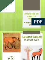 Animales de Nuestro Lugar Proyecto Enciclopedia