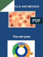 4. Siklus Sel dan Meiosis.pdf