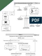 Manual de Macroivertebrados