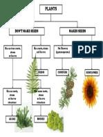 Plant Classification Chart