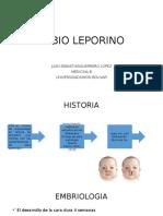 Labio Leporino