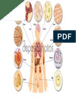 Anatomia de La Celula