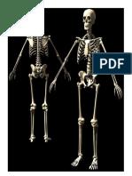 Esqueleto Artes