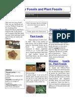 fossilgroupnewspaper