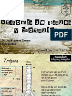 anatomadetrqueaybronquios-130120194315-phpapp01.pptx