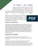 Embriología de Hígado y Vías Biliares