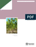 IPA Neem Tree Risk Assessment