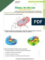 03 Clases de celulas - procariotas-eucariotas.pdf
