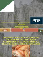 implementaciondeuncultivodetilapiarojaen-120220152305-phpapp01